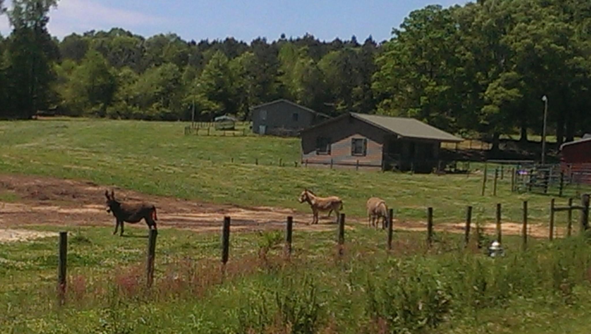 Livestock at the Googled Warrior Dash Location